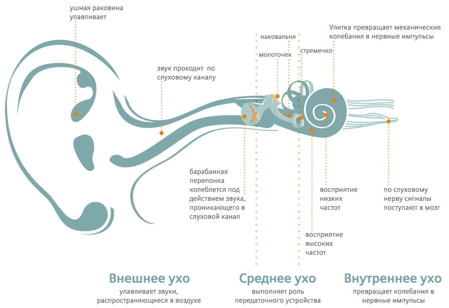 Патологии органов слуха у призывника